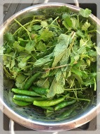 Image result for green chillies mint & coriander